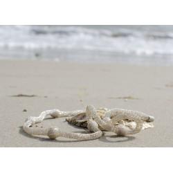 Fast wie in ihrer natürlichen Umgebung: Perlen am Strand - gut eingepackt im Silberschlauch: So trägt man heute Perlen.
